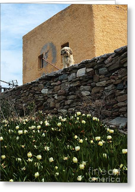 Stone House Greeting Cards - Waiting in Delos for You Greeting Card by John Rizzuto