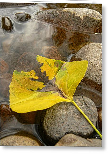 Puddle Greeting Cards - Waiting Leaf Greeting Card by Jennie Marie Schell