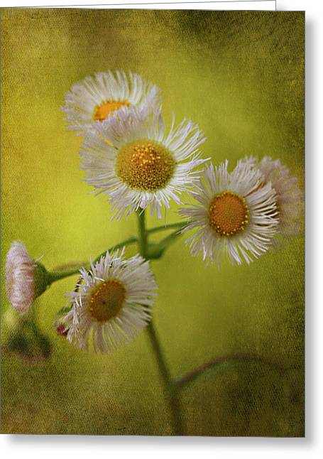 Green Blade Of Grass Greeting Cards - Waiting Greeting Card by Lyndsey Warren