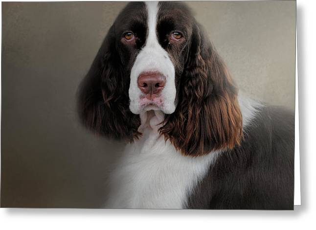 Dog Photo Greeting Cards - Waiting Patiently - English Springer Spaniel Greeting Card by Jai Johnson