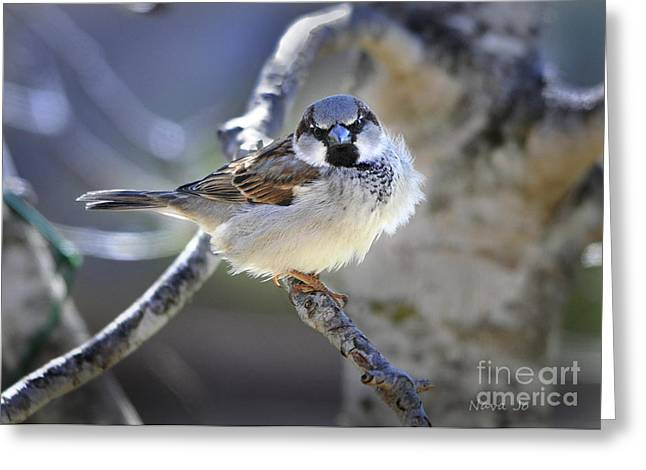 White Photographs Greeting Cards - Waiting Patiently Greeting Card by Nava  Thompson