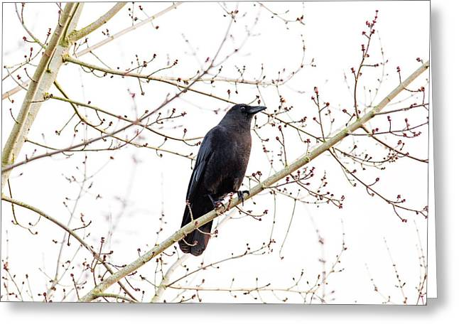 Black Bird Greeting Cards - Waiting Greeting Card by Rebecca Cozart
