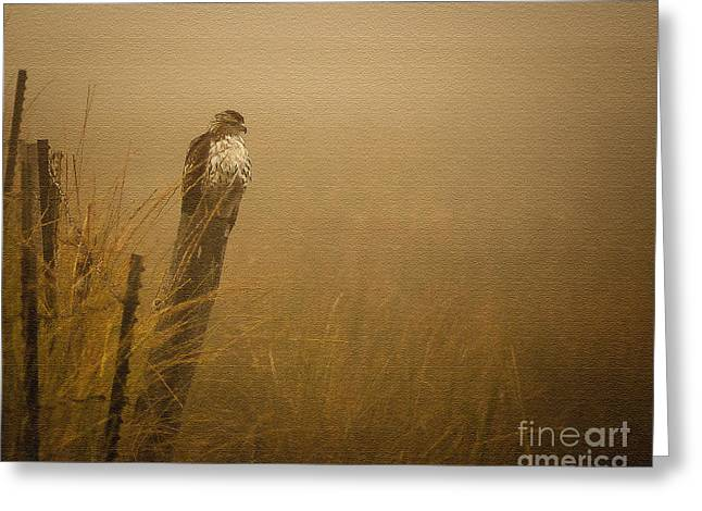 Hunting Bird Greeting Cards - Waiting Greeting Card by Steven Reed