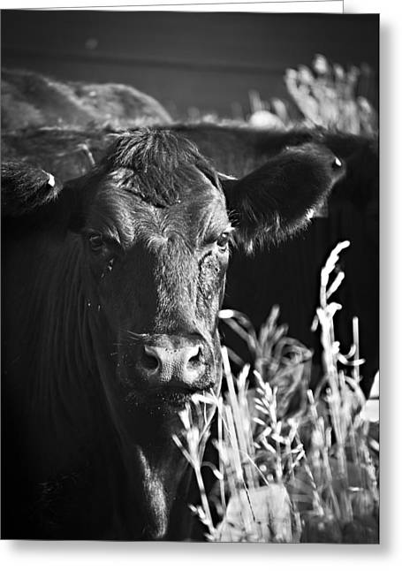Moos Print Greeting Cards - Waiting To Feed Greeting Card by Matthew Blum