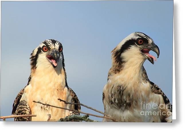 Waiting To Fly Greeting Card by Geraldine DeBoer