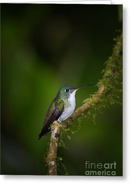 Moss Green Greeting Cards - Waiting Greeting Card by Todd Bielby