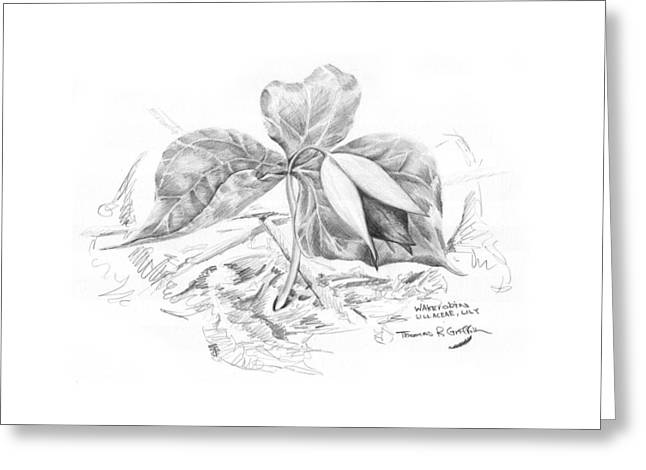 Naturalistic Drawings Greeting Cards - Wake Robin 2008 Greeting Card by Thomas Griffith