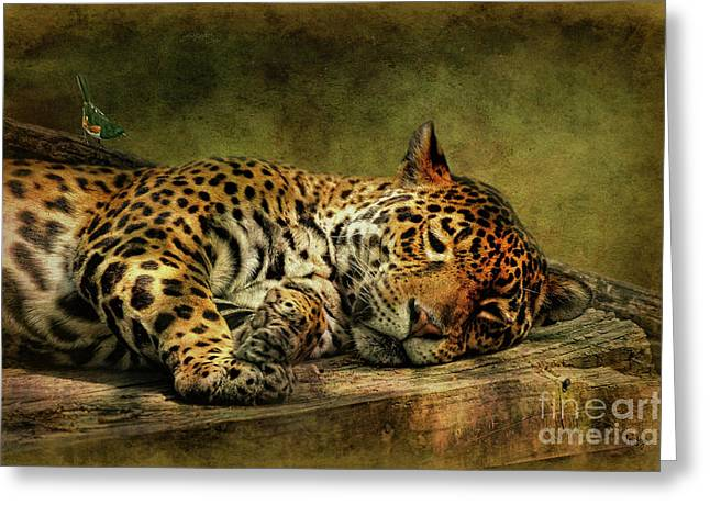 Small Digital Greeting Cards - Wake Up Sleepyhead Greeting Card by Lois Bryan