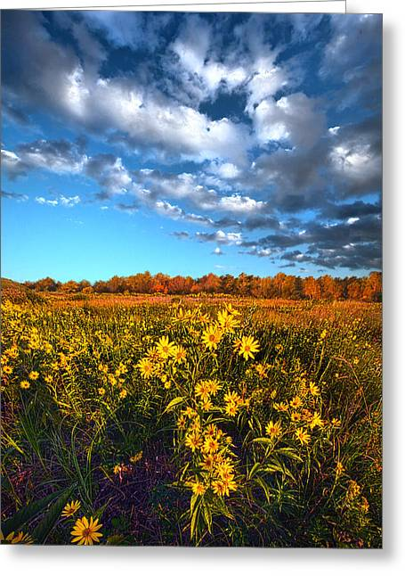 Fall Trees Greeting Cards - Waking in Autumn Greeting Card by Phil Koch