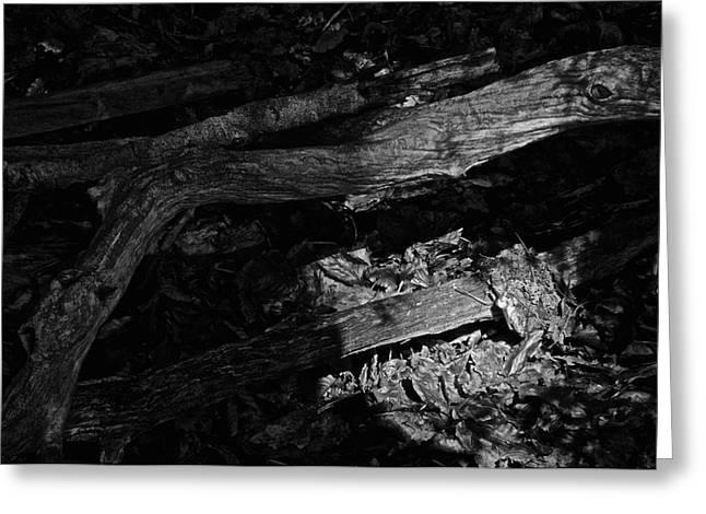 Forest Floor Greeting Cards - Waking The Dead Greeting Card by Odd Jeppesen