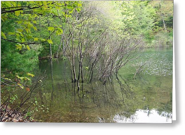 Walden Pond Photographs Greeting Cards - Walden Pond Greeting Card by Catherine Gagne