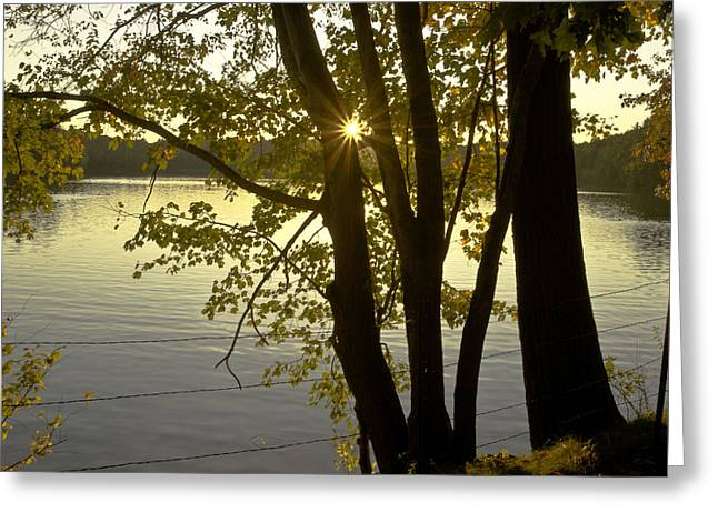 Walden Pond Greeting Cards - Walden Pond Greeting Card by Danny Vaughn