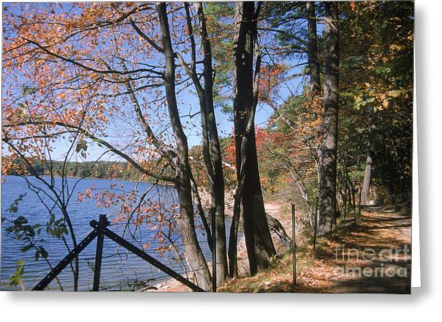 Walden Pond Greeting Card by Eunice Harris