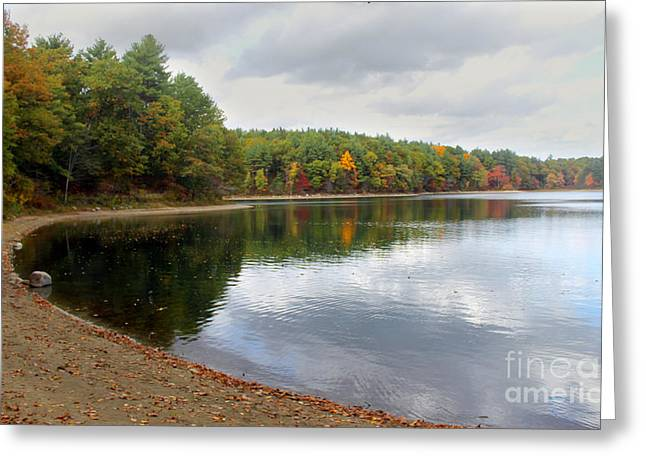 Walden Pond Greeting Cards - Walden Pond in Bloom Greeting Card by Oliver Doyle