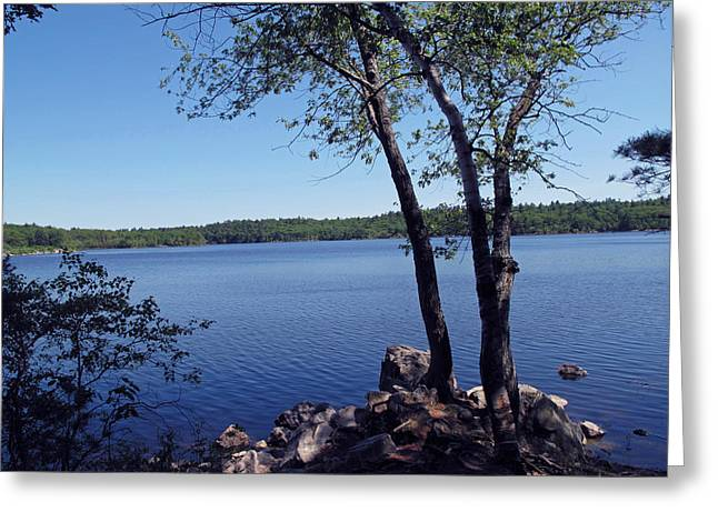 Lake Walden Greeting Cards - Walden Pond Saugus MA Greeting Card by Barbara McDevitt