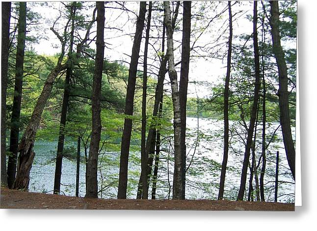 Walden Pond Greeting Cards - Walden Pond through trees Greeting Card by Catherine Gagne