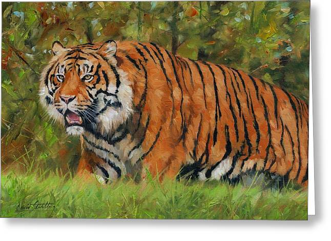 Tigress Greeting Cards - Walk in the Forest. Amur Tiger Greeting Card by David Stribbling