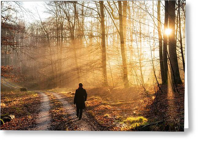 Licht Greeting Cards - Walk in the forest warm light sun is shining Greeting Card by Matthias Hauser