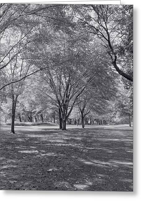 Walk In The Park Greeting Card by Kim Hojnacki
