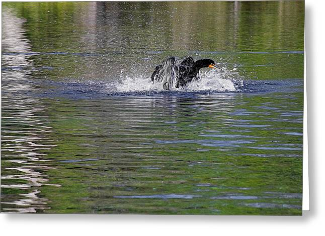 Tropical Bird Greeting Cards - Walk on Water - The Anhinga Greeting Card by Christine Till