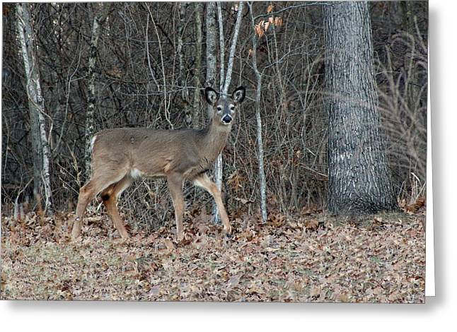 Most Viewed Digital Greeting Cards - Walk Softly Greeting Card by Lorna Rogers Photography