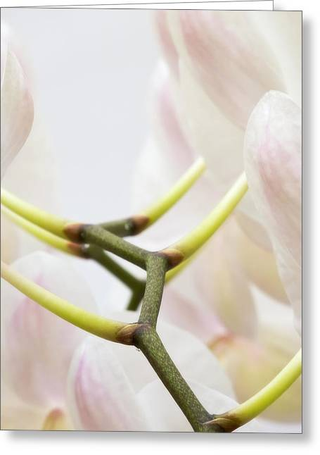 Color Green Greeting Cards - Walk The Orchid Greeting Card by Wim Lanclus