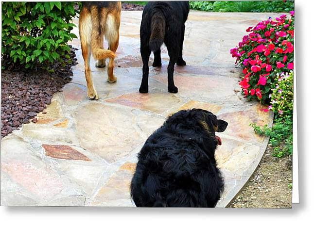 Walk This Way Greeting Card by Mary Beth Landis