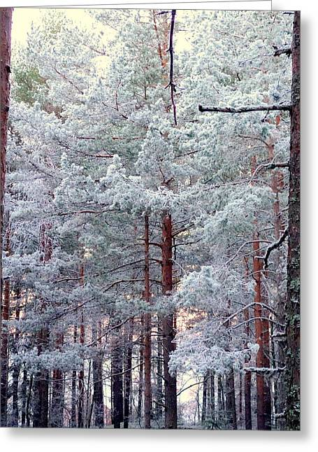 Smooth Ride Greeting Cards - Walk Through The Forest Greeting Card by Hilde Widerberg