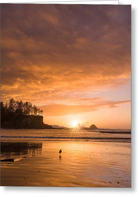 Sunset Bay State Park Greeting Cards - Walk Towards the Light Greeting Card by Patricia  Davidson