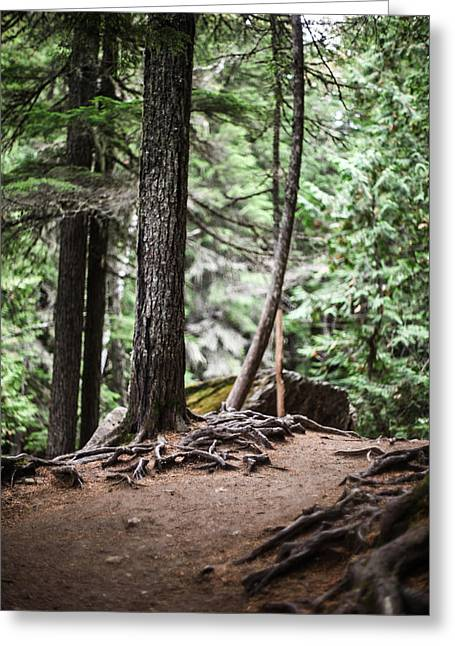 Tree Roots Photographs Greeting Cards - Walk With Me Greeting Card by Aaron Aldrich