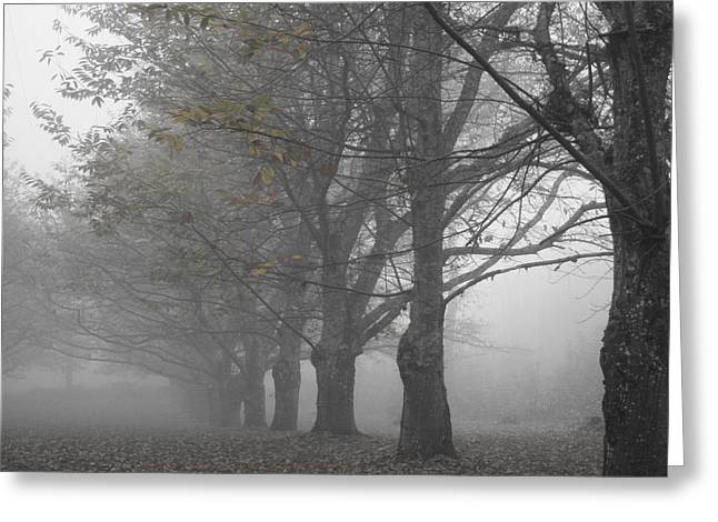 Line Of Trees Greeting Cards - Walk with me - Chestnut Trees in Fog Greeting Card by Nomad Art And  Design