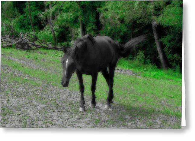 Horse Images Greeting Cards - Walker Greeting Card by Gothicolors Donna Snyder