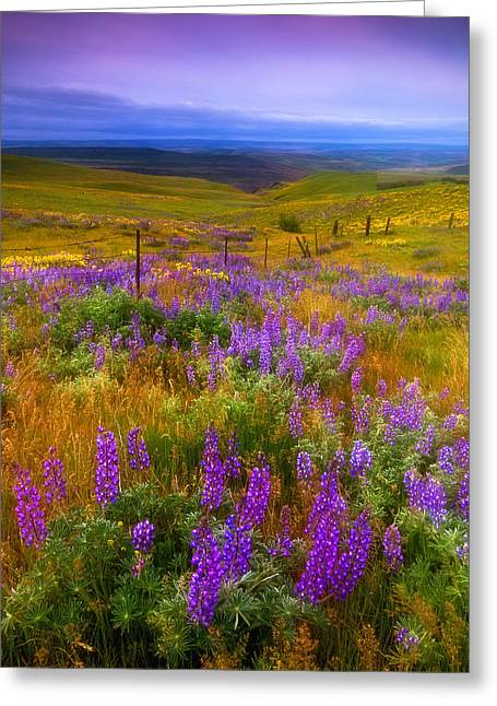 Wildflower Photography Greeting Cards - Walking along the Fence line Greeting Card by Darren  White