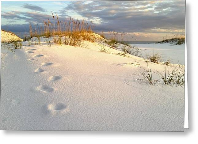 Walking In Destin Greeting Card by JC Findley