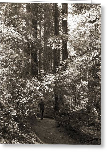 Redwood Tree Greeting Cards - Walking in the Redwoods 1 Greeting Card by Mike McGlothlen