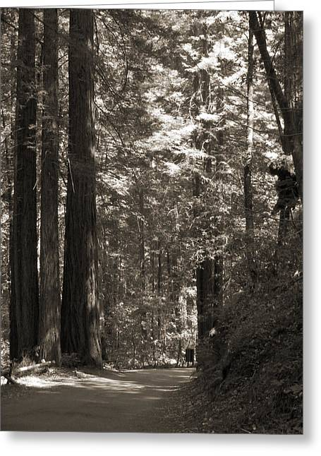 Redwood Tree Greeting Cards - Walking in the Redwoods 2 Greeting Card by Mike McGlothlen