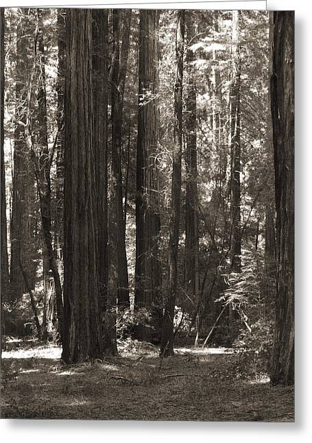 Redwood Tree Greeting Cards - Walking in the Redwoods 4 Greeting Card by Mike McGlothlen