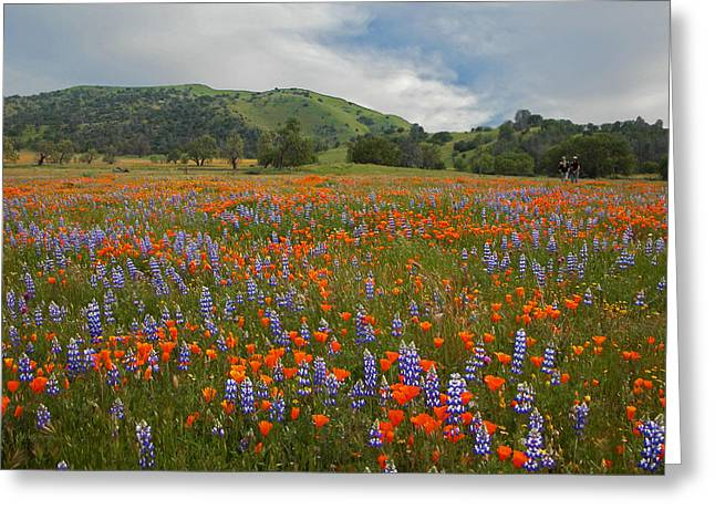 Recently Sold -  - Oak Creek Greeting Cards - Walking in the Wildflowers Greeting Card by Lynn Bauer