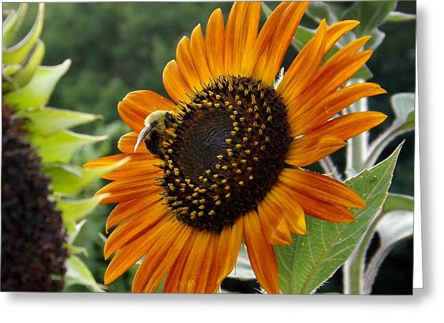 Wildseed Greeting Cards - Walking on Sunshine Greeting Card by Elizabeth Sullivan