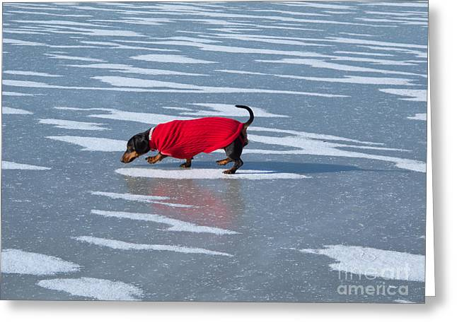 Dog Sweaters Greeting Cards - Walking on Water Greeting Card by Ann Horn
