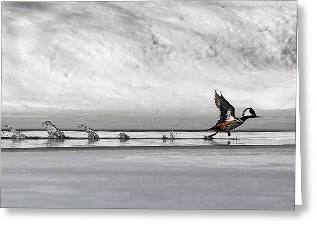 Walking On Water Greeting Cards - Walking on Water Greeting Card by Bill  Wakeley