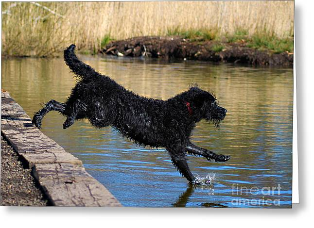 Diving Dog Greeting Cards - Walking on Water Greeting Card by Michelle Orai