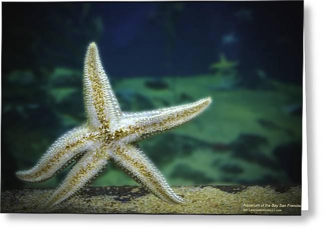 Aquatic Greeting Cards - Walking Pink Sea Star   Greeting Card by LeeAnn McLaneGoetz McLaneGoetzStudioLLCcom