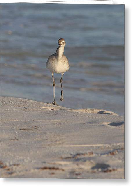 Seabirds Pyrography Greeting Cards - Walking Tall Greeting Card by Charles Warren