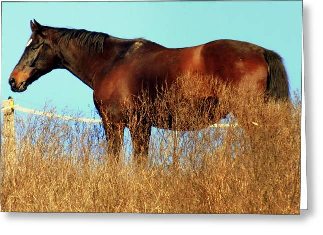 Race Horse Greeting Cards - Walking Tall Greeting Card by Karen Wiles
