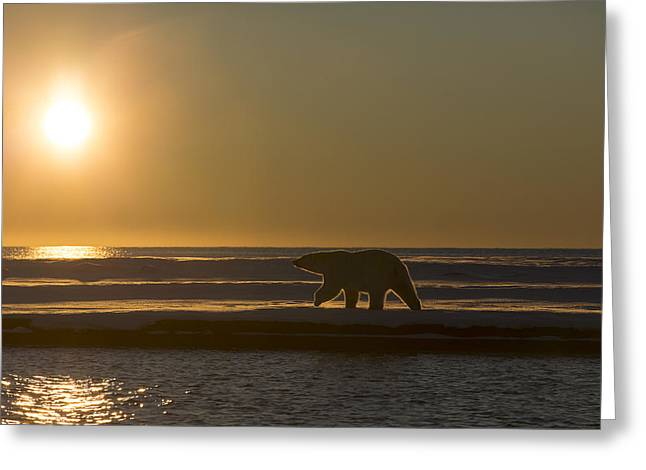 Ocean Mammals Greeting Cards - Walking the Beach at Sunset Greeting Card by Tim Grams