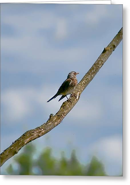Sit-ins Greeting Cards - Walking To Haeven Wildfowl Resting On A Tree Which Seems To End In Heaven Greeting Card by Leif Sohlman