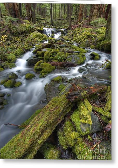 Running Water Greeting Cards - Walking to Sol Duc Greeting Card by Marco Crupi