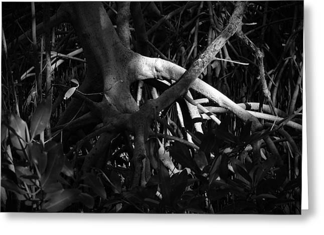 Best Sellers -  - Mangrove Forest Greeting Cards - Walking Tree Number 1 Greeting Card by Phil Penne