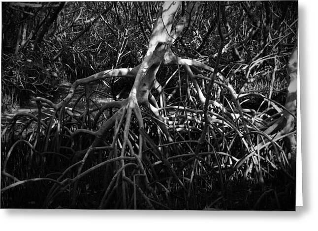 Best Sellers -  - Mangrove Forest Greeting Cards - Walking Tree Number 2 Greeting Card by Phil Penne